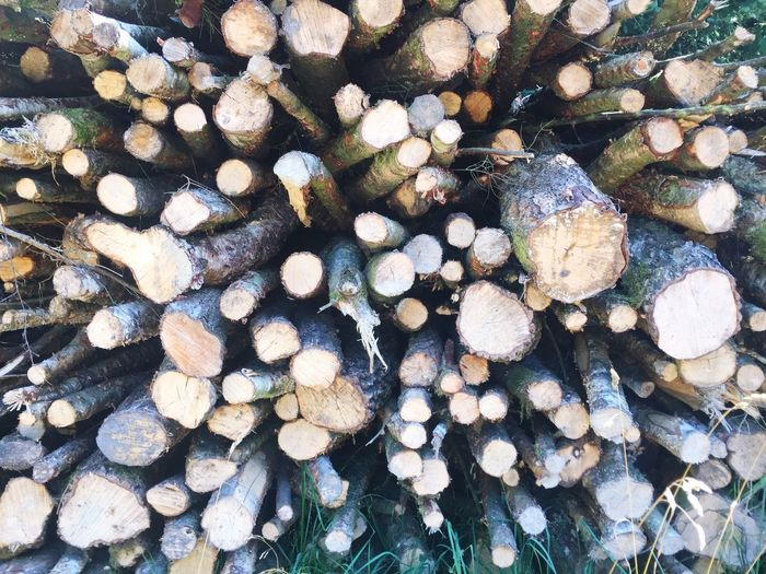 Log pile Timber Abundance Large Group Of Objects Log No People Deforestation Forest Pattern Wood - Material Day Nature Textured