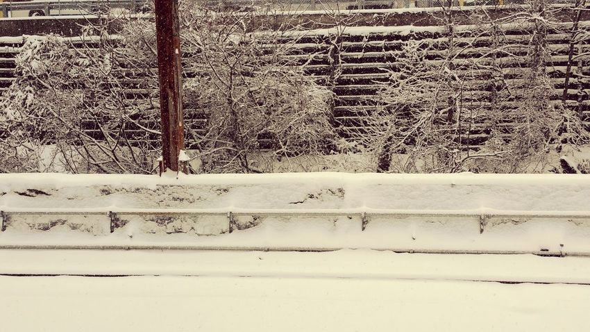 Taking Photos Winter Snow ❄ Photography Frost