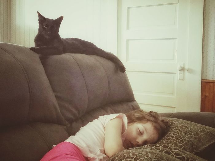 morning nap Pets Child Togetherness Childhood Bonding Domestic Cat Lying Down Pillow Looking At Camera Portrait Sleeping Cat Napping Couch Cushion At Home Cozy Feline