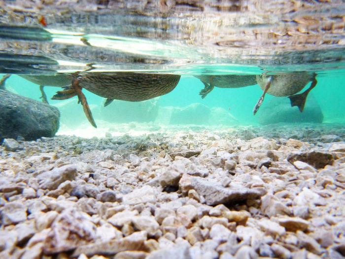 Unterwasserfotog