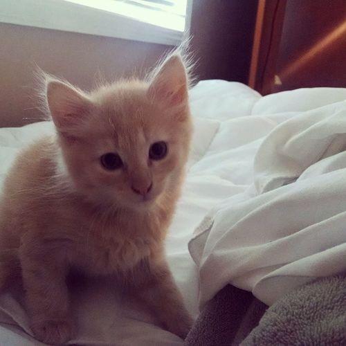 Meet the newest Welch, our cat, bug. Catbug Kitten Babywelch