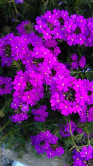 Mobile Photography Htc One M8s Flowers Colorful