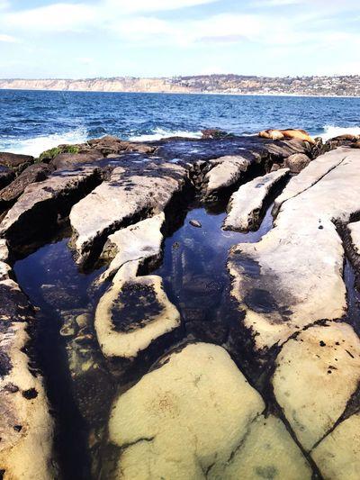 Searock Getclosetonature Beauty In Nature