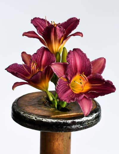 Lilies on wooden stool against white wall