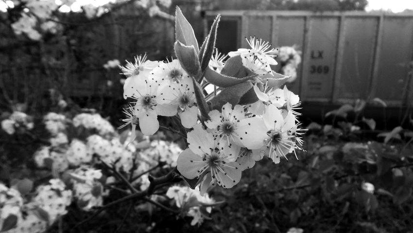 Urban Landscape Black And White Railroad Station Railroad Tracks Railroad Urban Spring Fever Flowers Springtime Spring Georgia Atlanta Bloom Scottdale