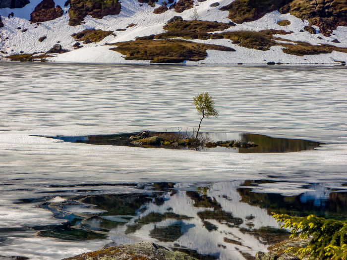 Beauty In Nature Cold Temperature Day Environment Floating On Water Frozen Ice Lake Melting Nature No People Outdoors Plant Reflection Scenics - Nature Snow Tranquil Scene Tranquility Water Winter