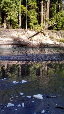 River Day I<3u In Nature  Redwoods California Humboldt County Reflections In The Water Eyeem California Eye4photography  EyeEm Nature Lover EyeEm Best Shots EyeEm Gallery Eyeem River Life From My Point Of View Smartphonephotography Capture The Moment Mobile Photography Lobuephotos Motorola Colour Of Life My Year My View Place Of Heart