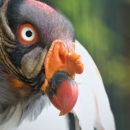 Nature Animals Prague Wildlife Canon600D Canon Cheese! Face Capture The Moment