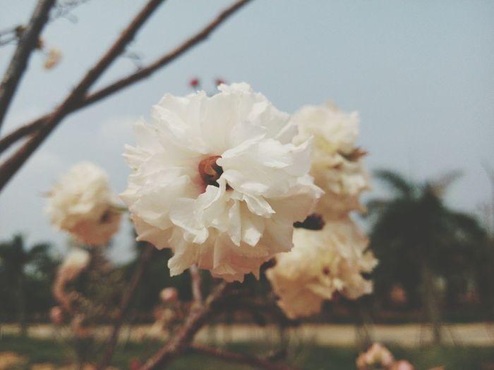 Flower 💝