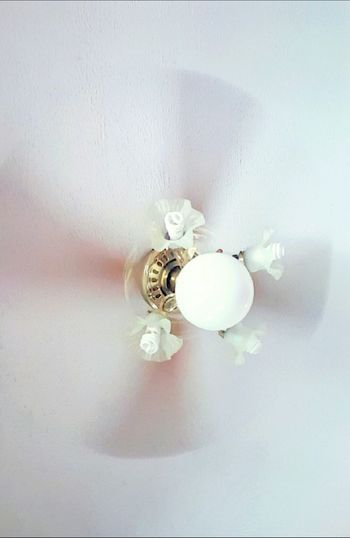 days like theses... Fan Rose Lights White Background White Flowers Cooling Off Peaceful Vintage Photo Style
