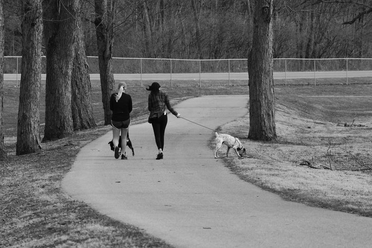 Rear View Of Female Friends With Dogs Walking On Pathway Amidst Trees