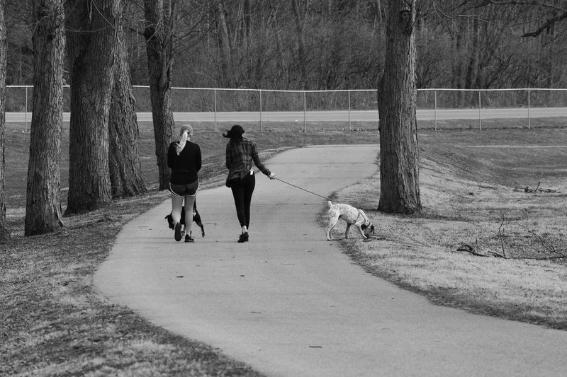 Black And White Black & White Dogs Exercise Friends Parks Parks And Recreation Path Pathway People Walk In The Park Walking Walking The Dog Walking The Dogs Showcase March
