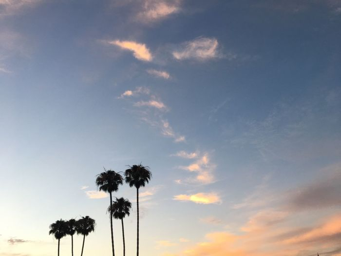 Palm Tree Sky Tree Cloud - Sky Low Angle View Beauty In Nature Silhouette Sunset Nature Tranquility Growth Outdoors Scenics Tranquil Scene No People Day Flower