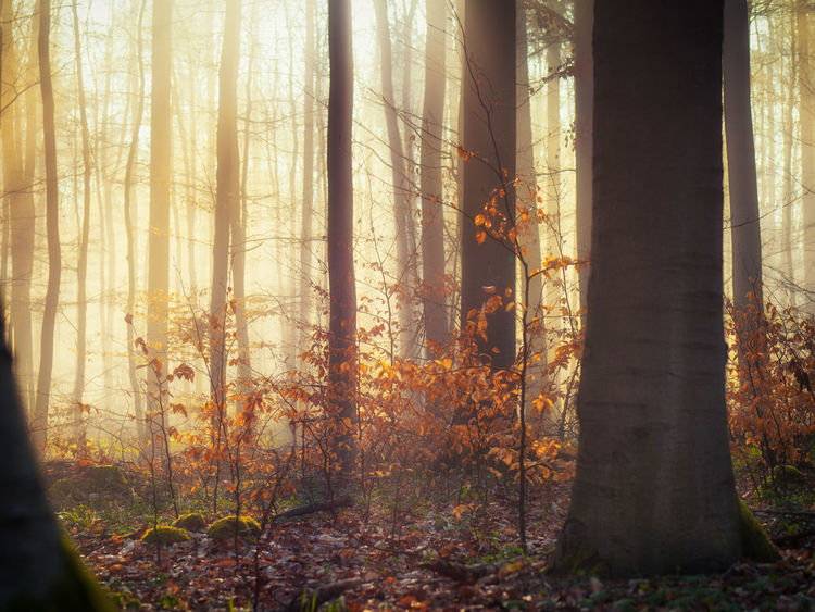 Morning glory. Beauty In Nature Enchanted Forest Foggy Morning Forest Growth Misty Morning Morning Morning Light Nature No People Outdoors Scenics Tranquil Scene Tranquility Tree Tree Area WoodLand Woods