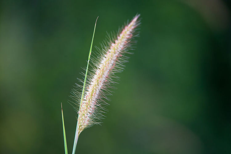 grass flower Beauty In Nature Botany Close-up Day Focus On Foreground Fragility Freshness Grass Green Color Growth Leaf Nature No People Outdoors Plant Plant Part Plant Stem Selective Focus Tranquility Vulnerability