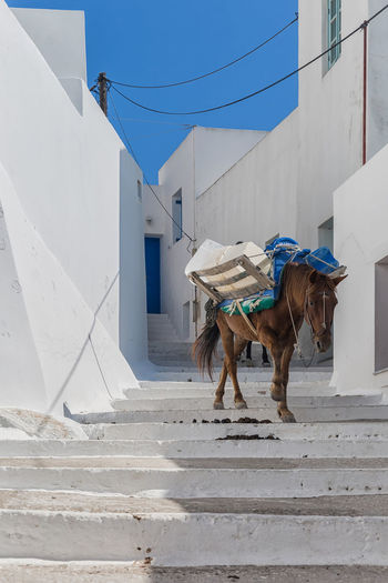 Local Greek Donkey with water tanks going along the street of Amorgos Animal Animal Photography Animal Themes Architecture Blue Blue Sky Building Exterior Built Structure Carrying Day Domestic Animals Mammal No People One Animal Outdoors Street Streetphotography Transportation Walking White