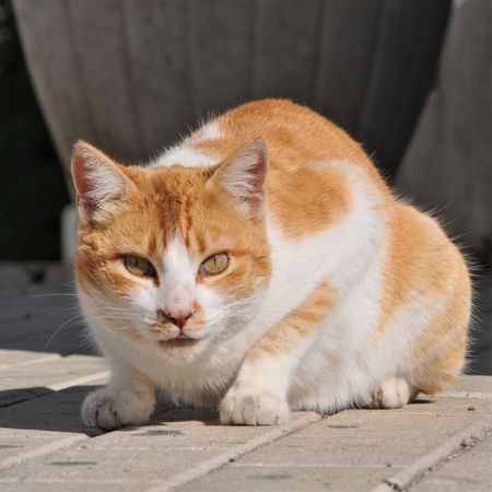 Day Domestic Animals Domestic Cat España Looking At Camera No People One Animal Sitting Sunlight Suspicious