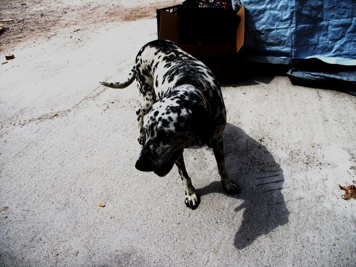 A funny dog is enjoying en a warehouse in Chíos Island, Greece Black Color Canine City Day Dog Domestic Domestic Animals High Angle View Mammal Nature No People One Animal Pets Shadow Street Sunlight Vertebrate