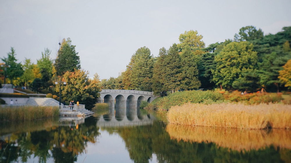 Reflection Tree Bridge - Man Made Structure Water Arch History Architecture No People Travel Destinations Day Outdoors Nature Beauty In Nature Sky Vacations Landscape Public Garden Olympic National Park Olympic Park  Autumnbeauty Korean Autumn Autumn Garden Bridge Bridge Over Water