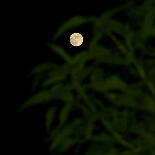 Fullmoon Moonlight Moonlover
