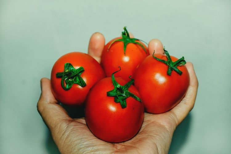 Close-up of hand holding tomatoes against white background