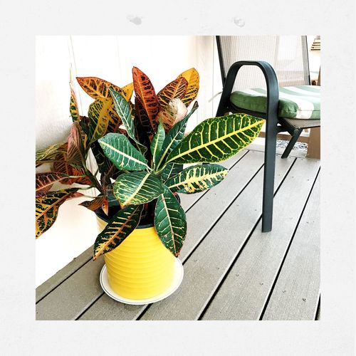 Auto Post Production Filter Yellow High Angle View Transfer Print Flower Plant Freshness No People Green Color Collection Shootermag_usa Shootermagazine Streamzoofamily Malephotographerofthemonth Nature Beauty In Nature IPhone7Plus
