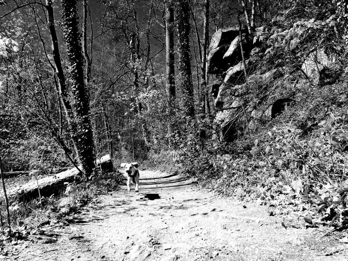 Blackandwhite Black & White Unforgettable ♥ Unforgettable Moment Hund Dog Bird Backgrounds Full Frame Low Section Pattern