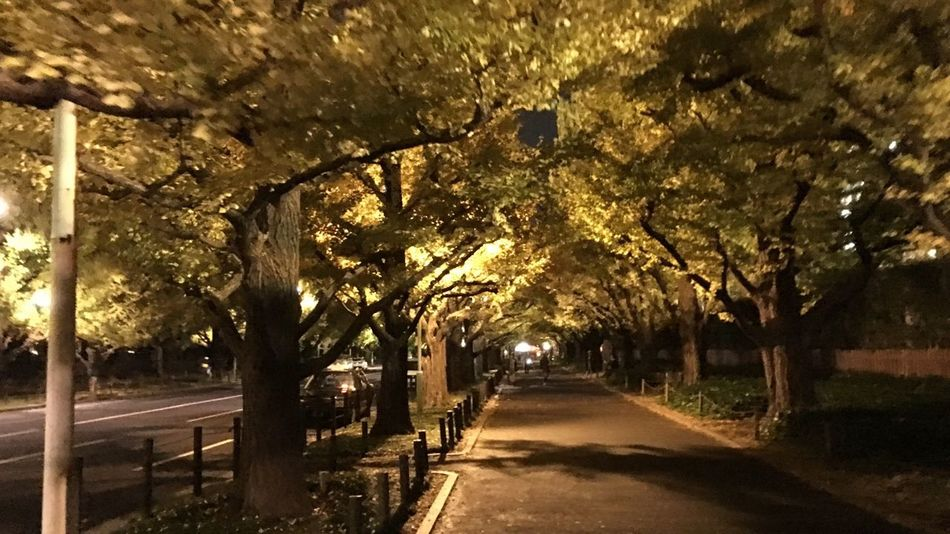 Tokyo stimulus lane: 神宮外苑銀杏並木は、まだ青い葉が多かったよ。 Boulevard No Standard World Tokyo Nature Night Photography Street Photography Nightphotography Streetphotography Tokyo Street Photography From My Point Of View Outdoors Nature Autumn Colors Ginko Beauty In Nature