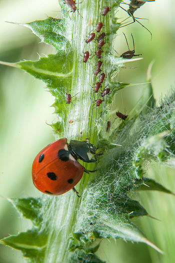 Animal Themes Animals In The Wild Beginnings Botany Close-up Drop Focus On Foreground Fragility Insect Ladybird Ladybirds 🐞 Ladybug Leaf Natural Pattern Nature New Life One Animal Plant Selective Focus Softness Springtime Wildlife
