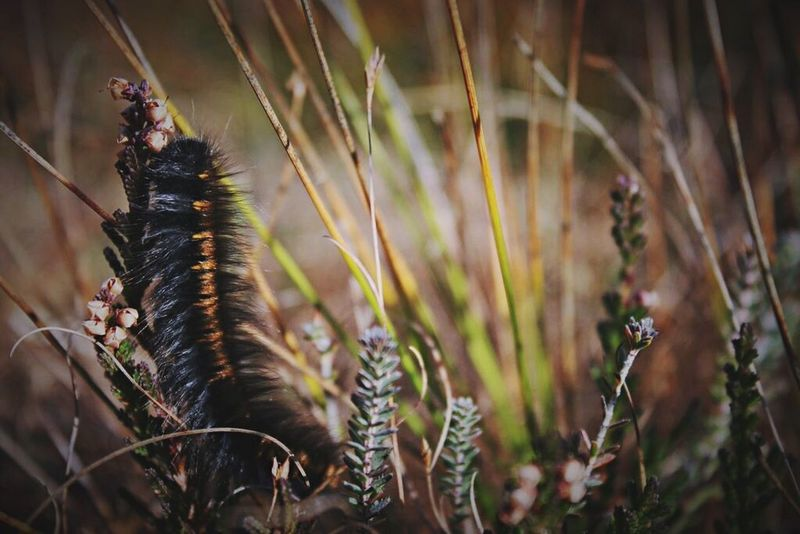 Showcase: February Catapiller Moth Butterfly Nature Nature_collection Nature Photography Nature On Your Doorstep Macro_collection Macro Photography Macro Beauty Macro
