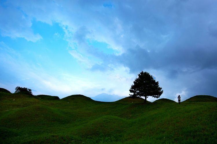 나홀로나무 Korea Daegu, Korea Tree Tree Area Field Sky Grass Landscape Cloud - Sky Tea Crop Tea Leaves Single Tree Growing