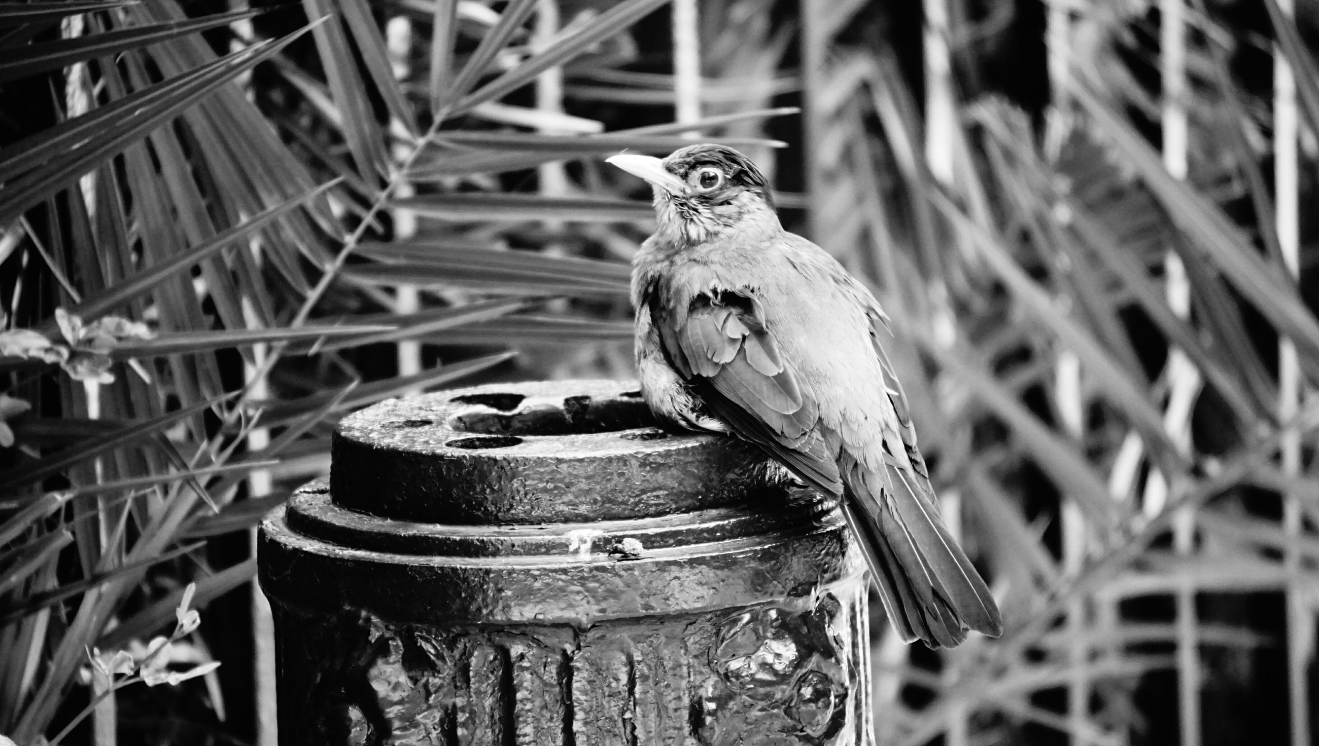 focus on foreground, metal, close-up, one animal, animal themes, outdoors, day, animals in the wild, metallic, no people, wildlife, old, rusty, bird, perching, low angle view, selective focus, built structure, nature, part of