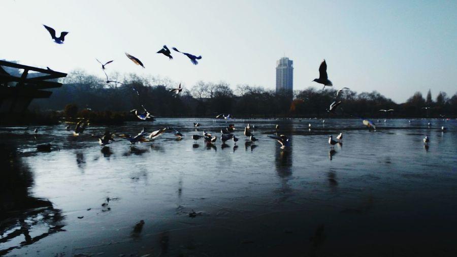 Birds skidding