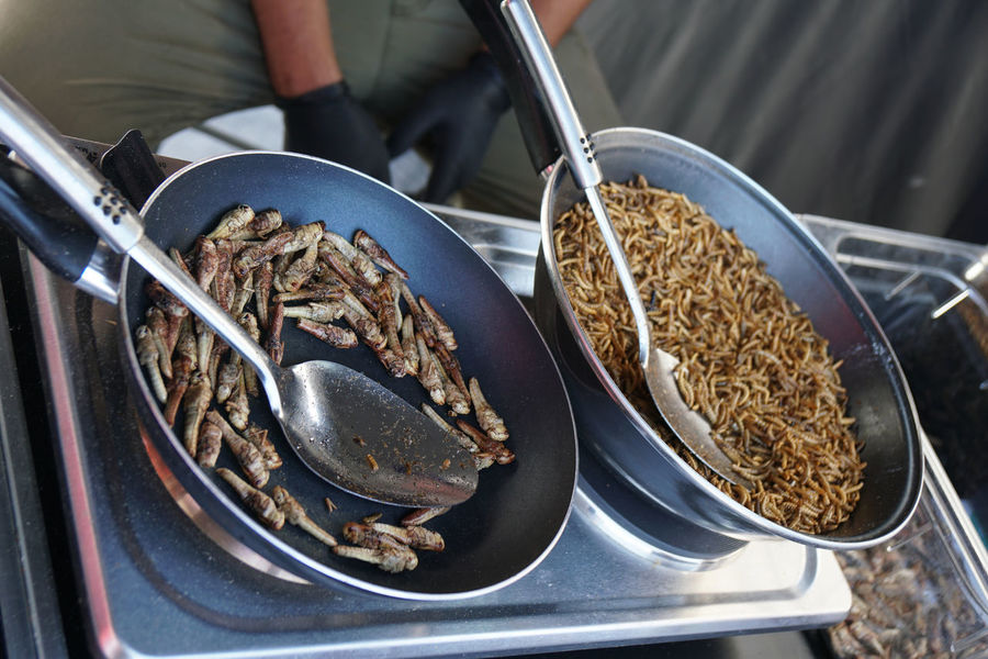 insects as food: fried crickets and mealworms Bizarre Frying Frying Pan Snack Asian Food Crickets Food Food And Drink Fried Healthy Eating Insects  Mealworms Protein Street Food Worms