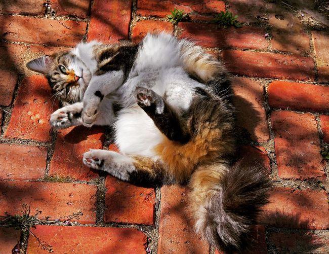 High angle view of cat lying down bricks