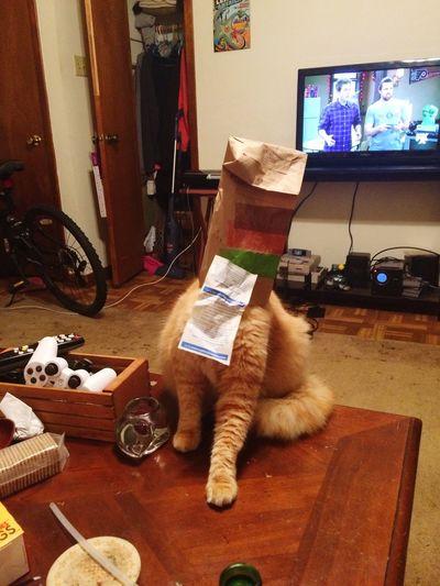 Stuckinabag Cat
