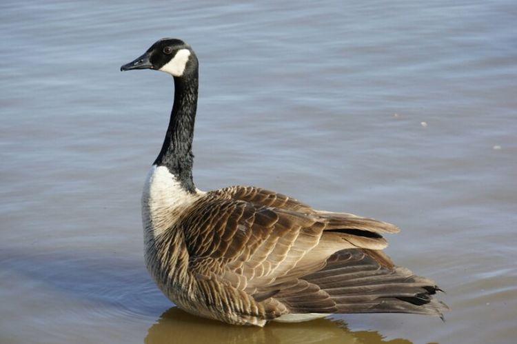 Washington DC Nature_collection Photography Ducks SNKshot