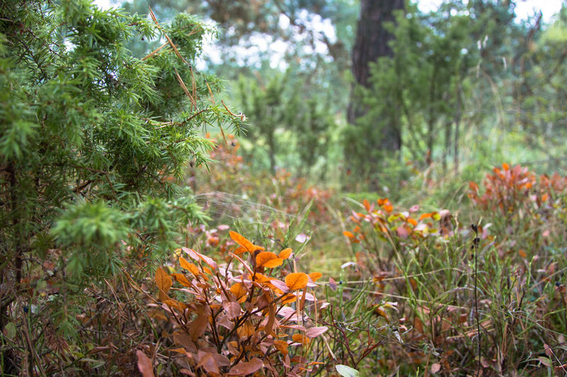 Autumn Beauty In Nature Close-up Day Focus On Foreground Forest Fragility Freshness Growth Leaf Nature No People Outdoors Plant Tree