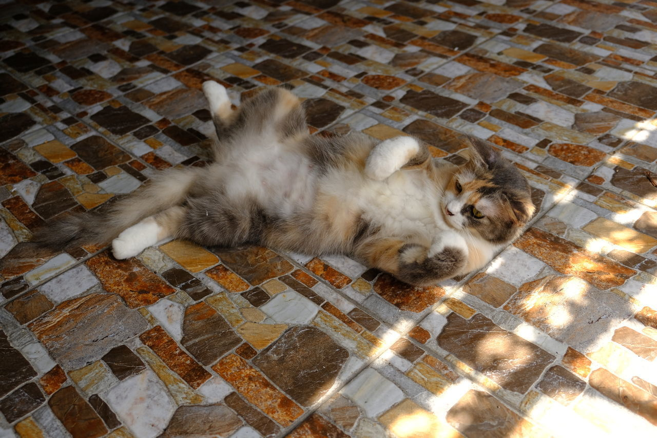 HIGH ANGLE VIEW OF A CAT SLEEPING ON FLOOR