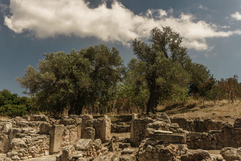 Olive Trees in Turkish Republic of Northern Cyprus Outdoors HDR Day Sony A6000 Feel The Journey Trees Tree Stone Historical Trnc Kktc Cyprus Kibris Wide Angle EyeEm Best Shots EyeEm Nature Lover Eye Em Nature Lover Eye Em Around The World