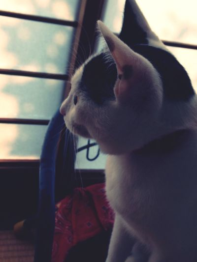 Pets Cat うちねこ