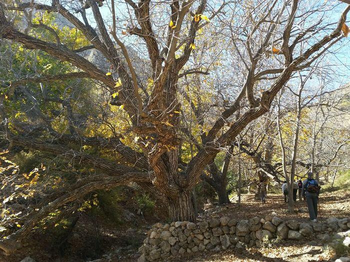 Nature around Shiraz, Iran November 2017 Autumn Walking Tour Beauty In Nature Forest Men Nature Outdoors Tranquility Tree Tree Trunk Wildlife