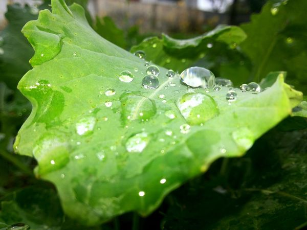 Water on leaf....... 4monthsago Lovethisshot RainyDay Naturelovers Click_india_click Photographylover Beauty In Nature Ultimatecrazyness Prince_negi Macro Beauty