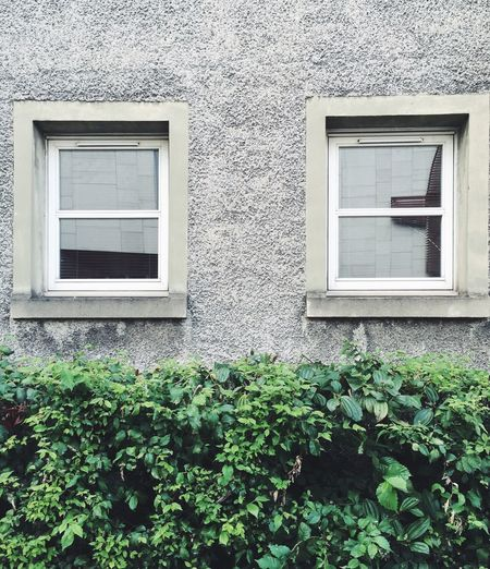 Plants growing by windows on building