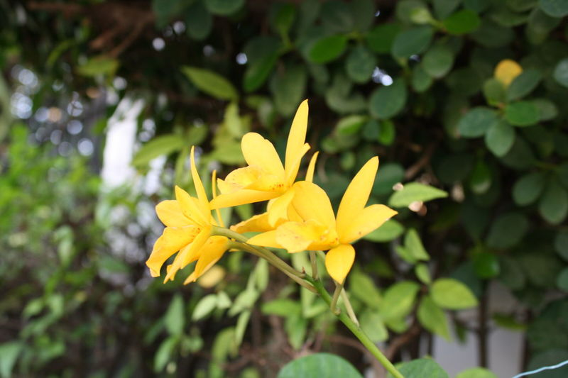 Yellow Day😁 Yellow Flowers Yellow Day Freshness Flower Nature Beauty In Nature Canon😉 Thailand🇹🇭