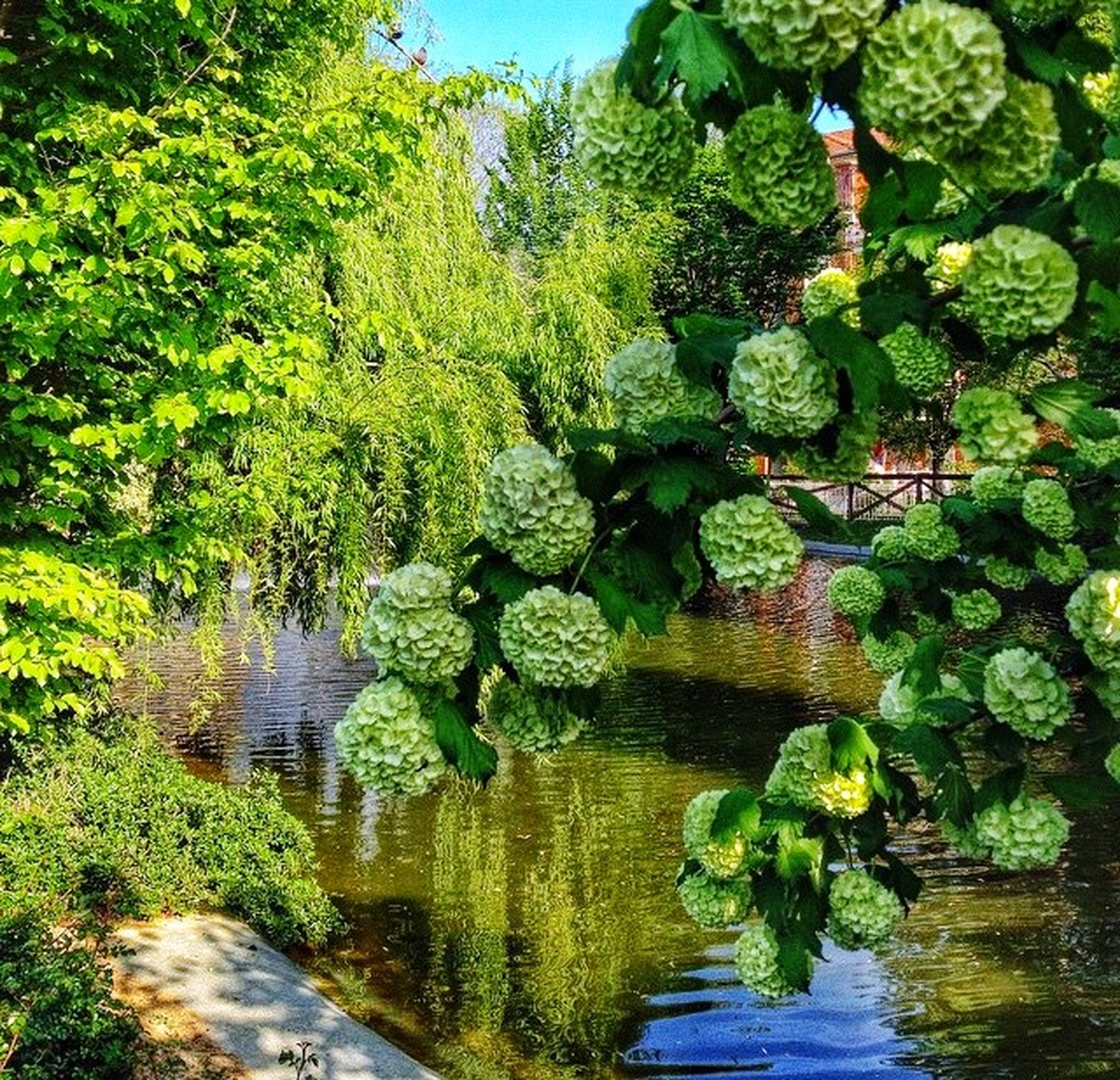 green color, water, growth, tree, tranquility, nature, beauty in nature, reflection, plant, tranquil scene, scenics, leaf, green, pond, freshness, day, outdoors, lush foliage, stream, idyllic