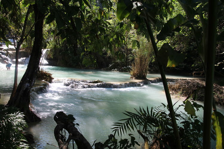 waterfalls at luang prabang Light Trees Adventure Beauty In Nature Contrast In Nature Day Forest Growth Jungle Nature No People Outdoors Plant Scenics Sky Tree Water Waterfalls Waterfalls At Luang Prabang Waterfalls Jungle Forest Trees Light Contrast