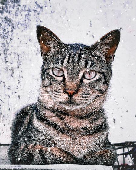 Cat Feline One