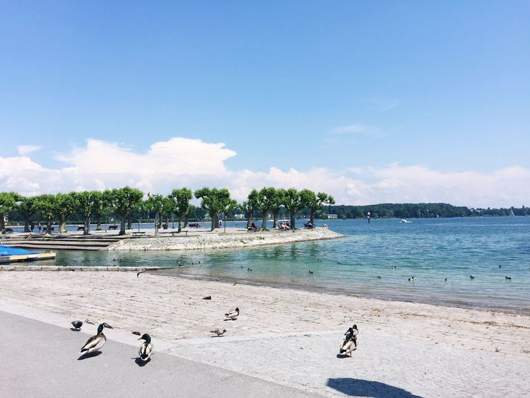 Water Beach Sea Sky Sand Cloud - Sky Day Nature Outdoors Animal Themes Summer Nautical Vessel Large Group Of Animals Beauty In Nature Scenics Tree Vacations Swimming Bird Jet Boat Jenae Switzerland