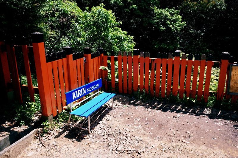 Absence Architecture Barrier Boundary Built Structure Day Fence Gate Growth In A Row Metal Nature No People Orange Color Outdoors Plant Red Shadow Sunlight Tree